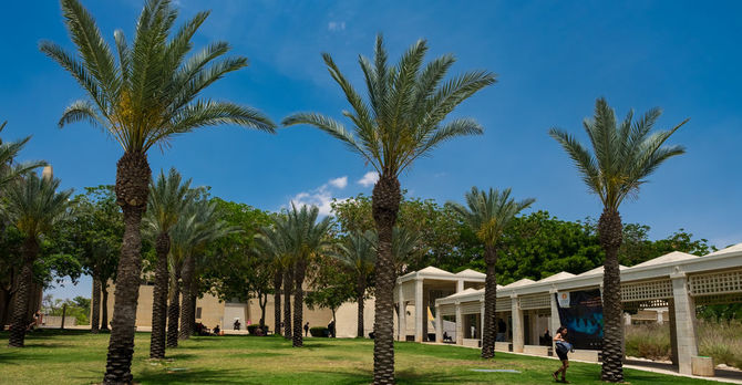 Palm trees on campus
