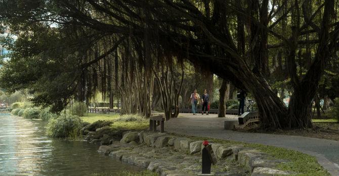 Trees in Taiwan